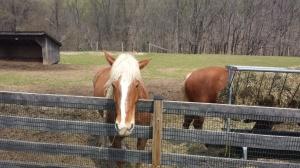 horses oxoh hill farm