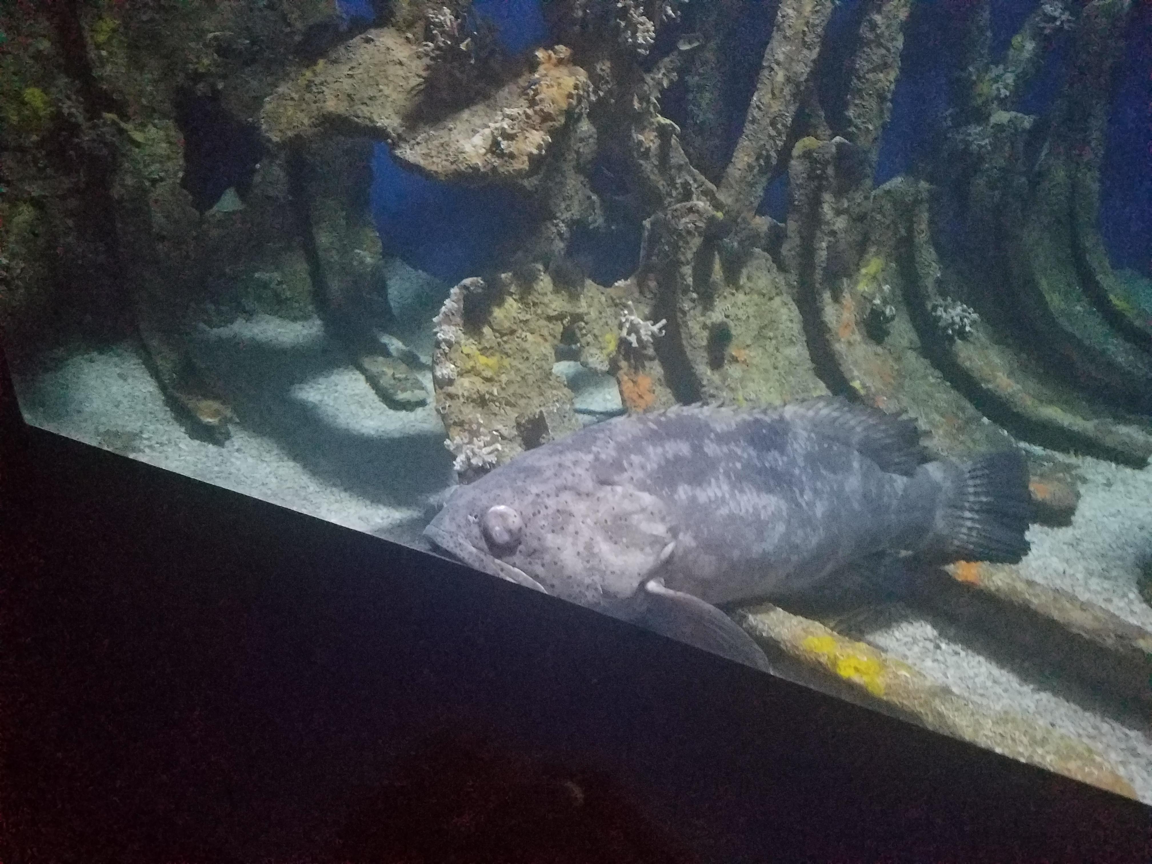 north carolina aquarium fort fisher the adventures of c a b